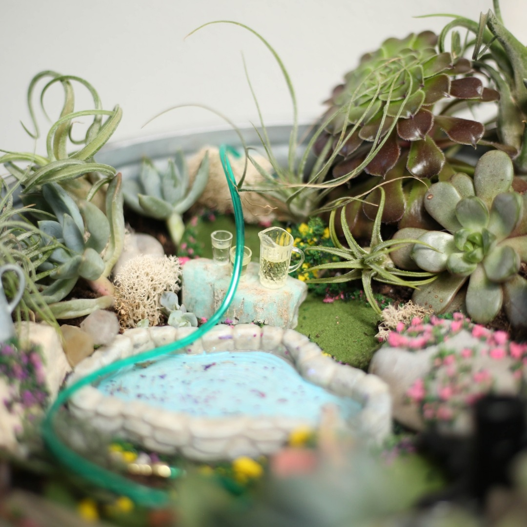 Miniature Spring Garden Scene With Succulents And Air Plants